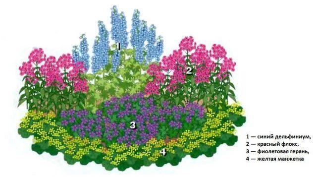 """Красивый цветник """"Для ленивых"""" из 4 многолетников украсит любой сад. Схема, описание и фото"""