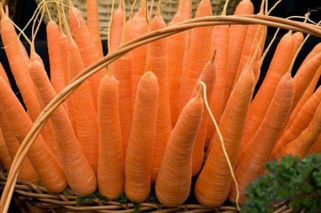 Что можно сажать после моркови на следующий год