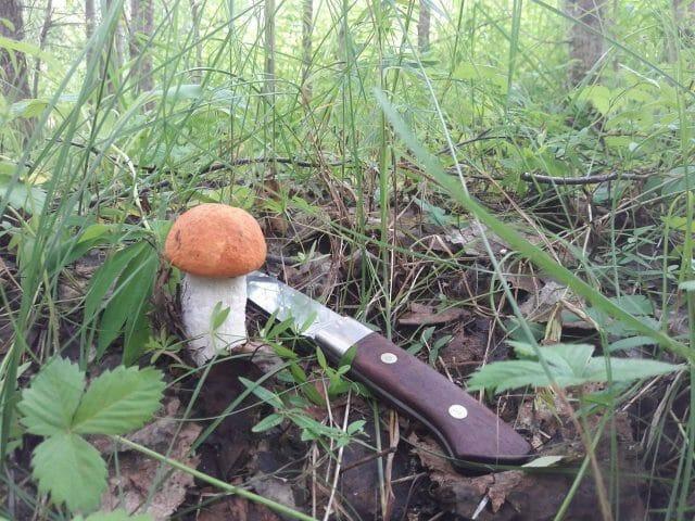 Календарь грибника - когда какие грибы собирать