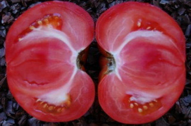 Почему у помидоров внутри появляются белые прожилки