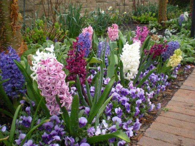Пять лучших цветов для сада с приятным ароматом