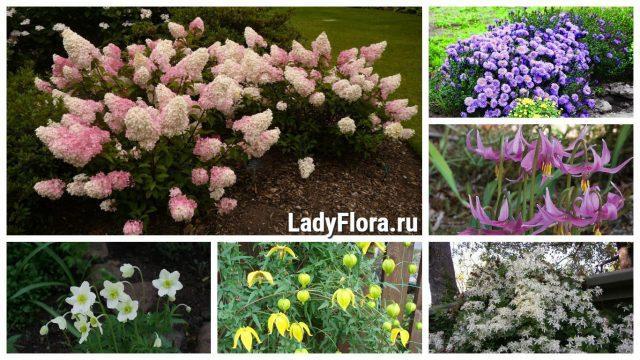Морозостойкие многолетники: 5 цветов, без труда переживающих суровую зиму