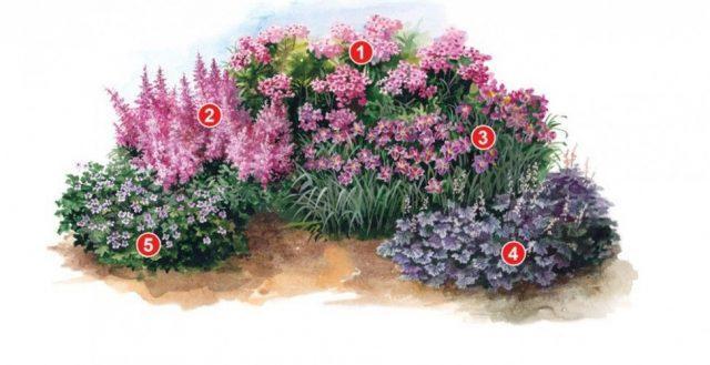 Эффектная клумба (2 метра) из пяти неприхотливых цветов: просто и со вкусом!