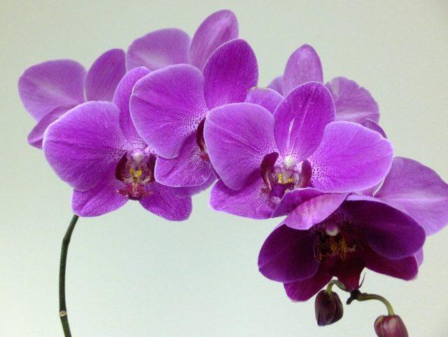 Пять лучших комнатных растений «для ленивых» с красивым цветением