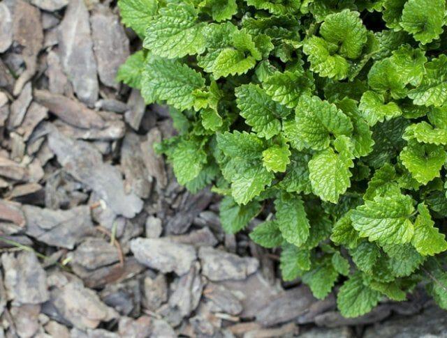 10 методов избавиться от сорняков – секреты «чистых» грядок