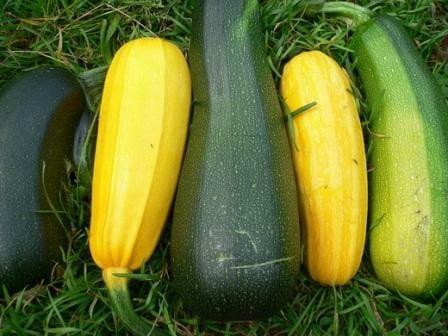 Как вырастить кабачки? Высадка, уход, сбор урожая, сроки уборки и посадки