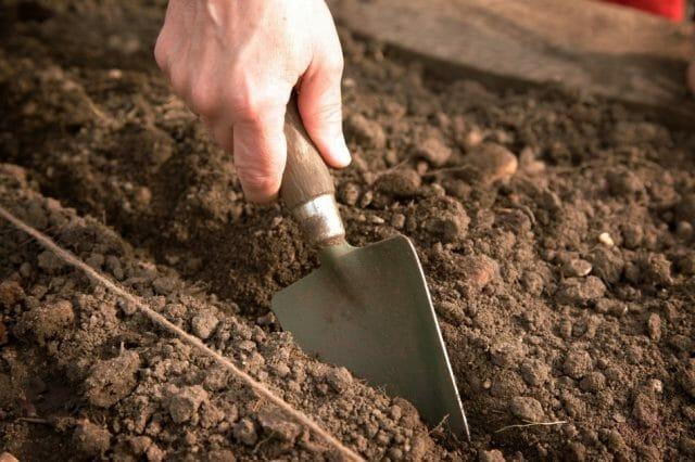 Посадка огурцов в открытом грунте: советы и рекомендации