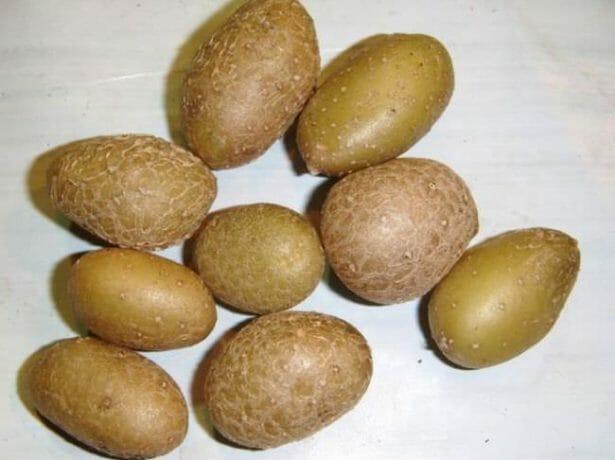 7 лучших сортов картофеля