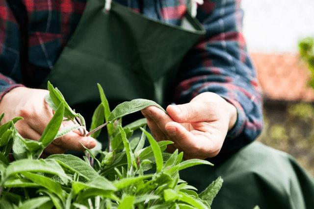 Как привести в порядок запущенные клумбы и цветники