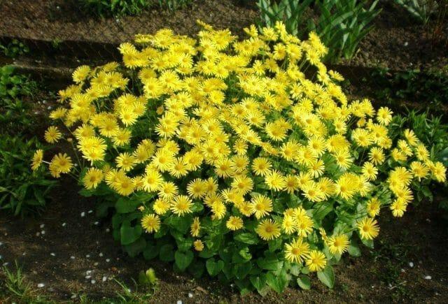 Многолетники для полутени в вашем саду: советы садоводам