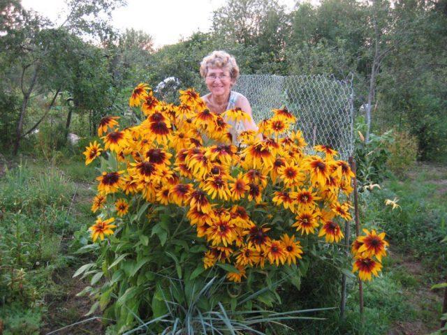 7 самых лучших многолетников-цветов, не боящихся засухи