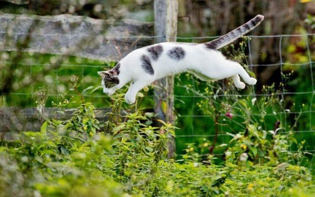 Как отвадить кошек от грядок без вреда для животных...
