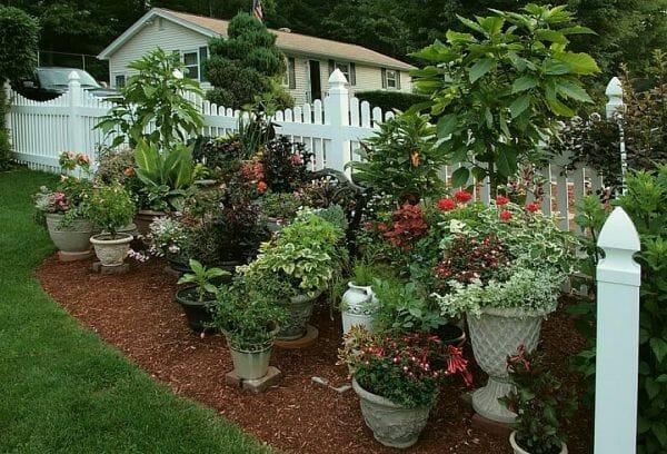Контейнерное садоводство - неприхотливые растения для вашего сада: советы садоводам