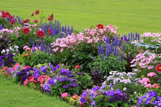 20+ цветов, которые можно посеять под зиму. Название, описание, фото