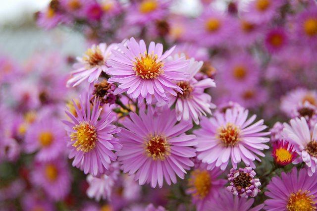Цветник из 5 многолетников: план и описание растений. Фото