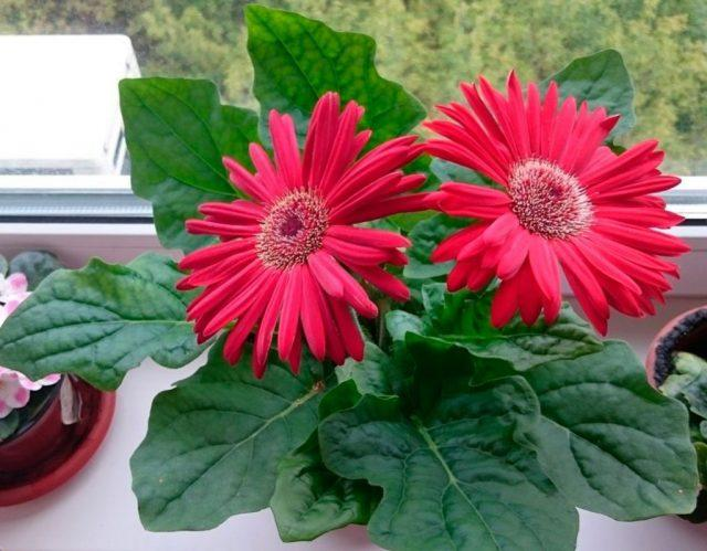 5 лучших комнатных растений для ярко-солнечного окна без капризов