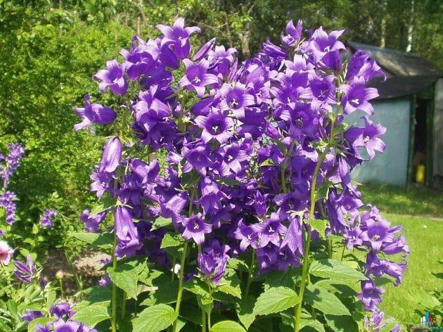 10 неприхотливых обитателей сада: советы садоводам