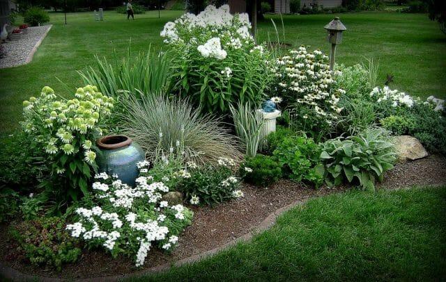 Садовые цветники: летники вместо прогалин - советы садоводам