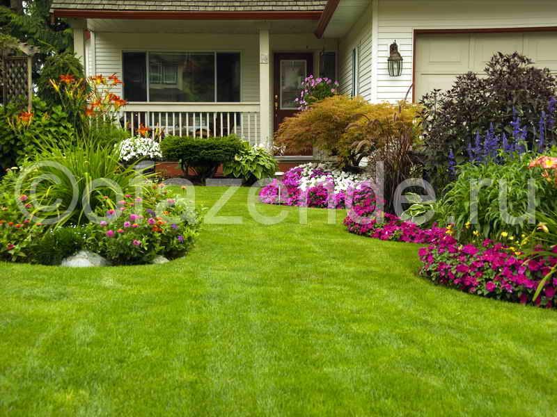 Цветущая лужайка перед домом своими руками: советы садоводам