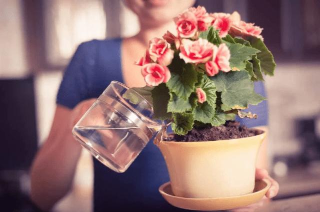 Чеснок, мыло и минералка — 3 супер-средства для комнатных растений