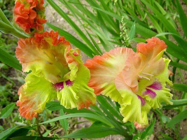 Подборка самых необычных сортов цветов августа