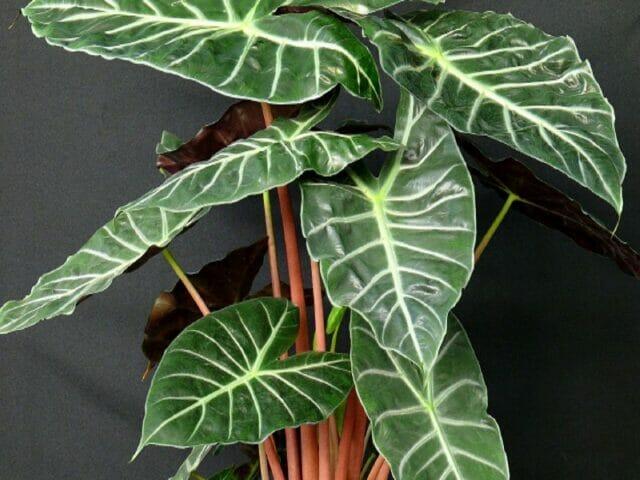 8 капризных комнатных растений