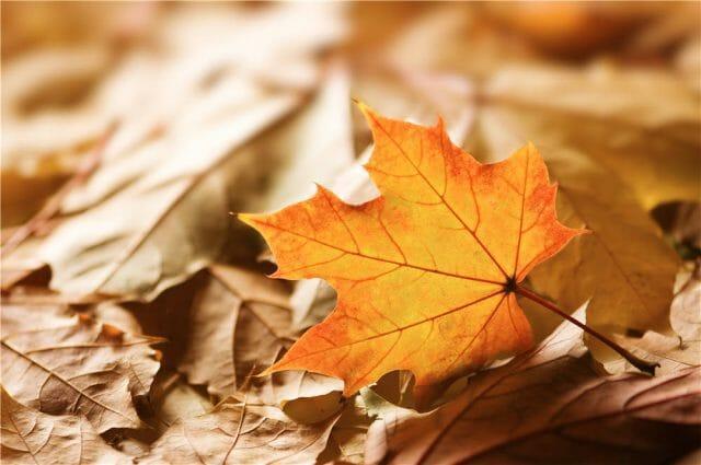 Как приготовить компост из опавших листьев
