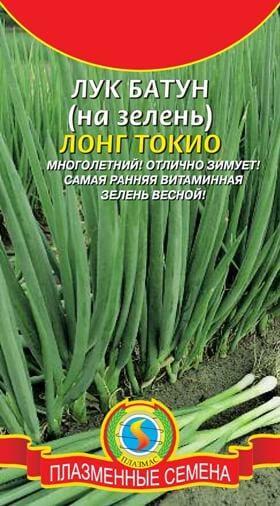 Лук батун: фото, посадка и уход в открытом грунте