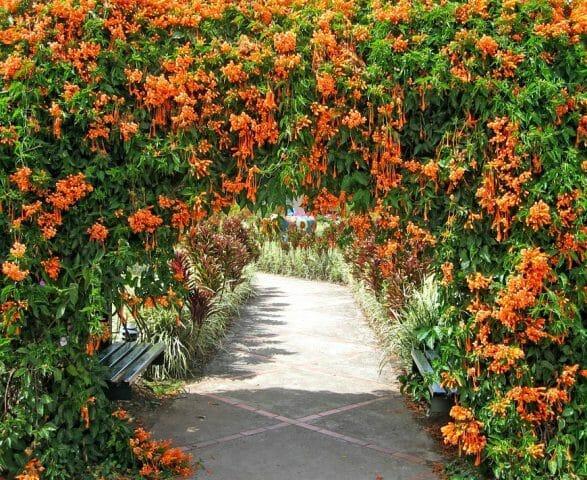 Вьющиеся растения в вашем саду: советы садоводам