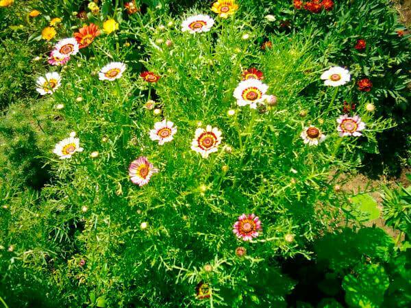 Однолетние цветущие растения в вашем саду: советы садоводам