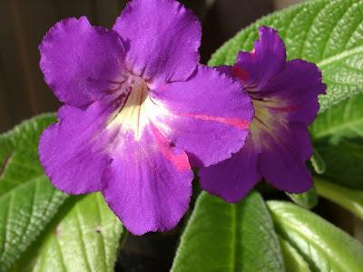 Необычный цветок для дома без заморочек: влюбилась в него в 2018 году!