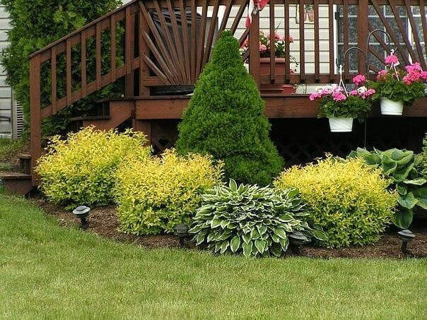Неприхотливые кустарники в вашем саду: советы садоводам
