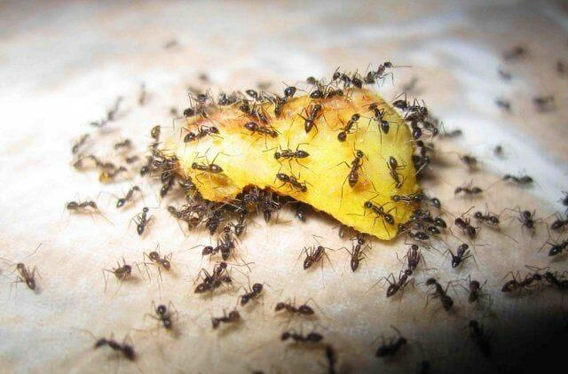 Как избавиться от муравьев на участке навсегда!