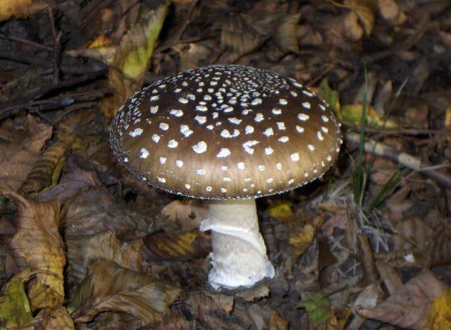 10 видов ядовитых грибов, которые лучше оставить в лесу