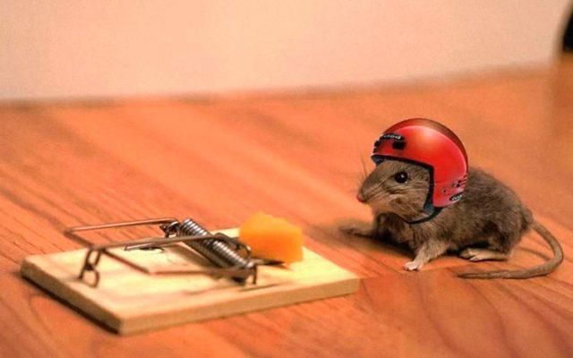 Как избавиться от мышей на даче: недорогой, но эффективный способ