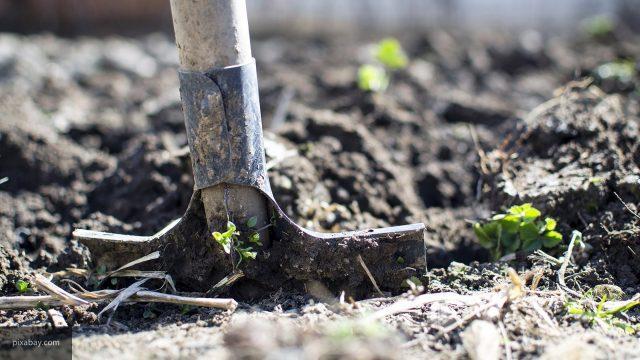 Почему не стоит перекапывать огород осенью: 5 причин
