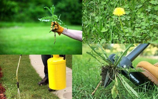 Борьба с сорняками под кустарниками: советы садоводам