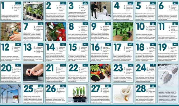Огородный календарь на Февраль