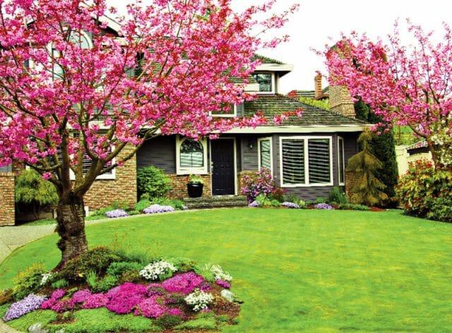 Декоративное дерево у дома: советы садовода
