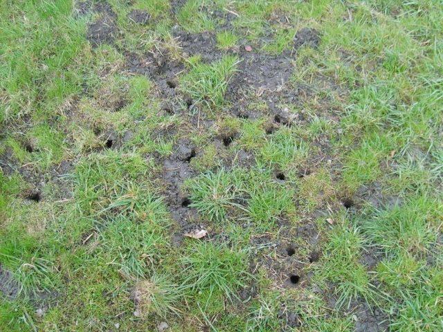Избавляемся от земляной крысы в огороде: недорогой гуманный метод