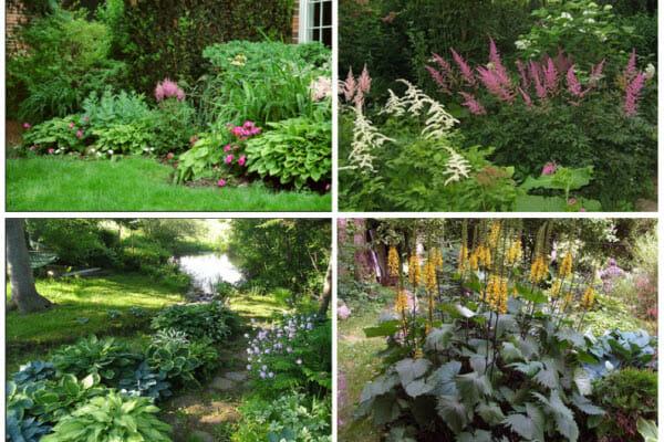 Садовые цветники в глубокой тени: советы садоводам