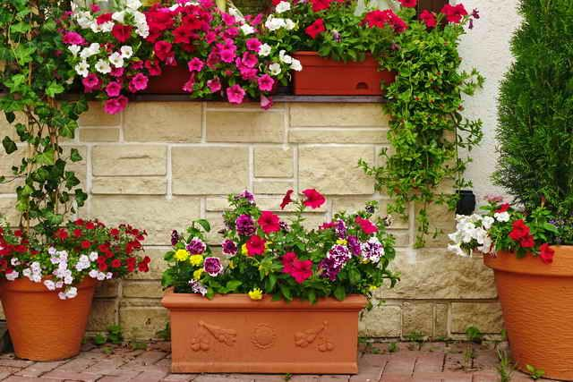 Сад в контейнерах своими руками: советы садоводам