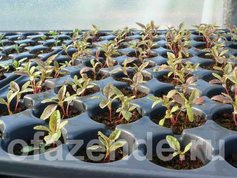 Выращивание из семян однолетников своими руками: советы садоводам