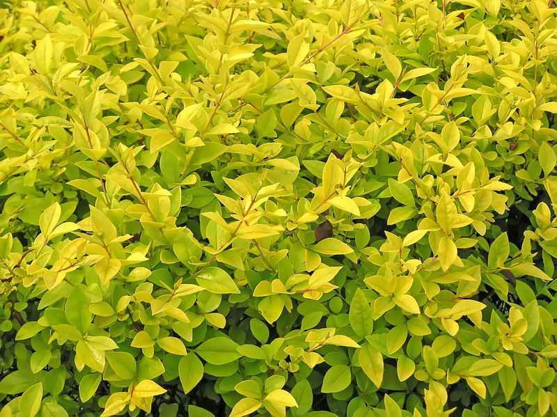 Неприхотливые вечнозеленые растения в вашем саду: советы садоводам