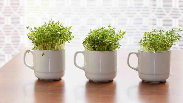 Витаминный конвейер. Какую зелень можно перенести с огорода в дом?