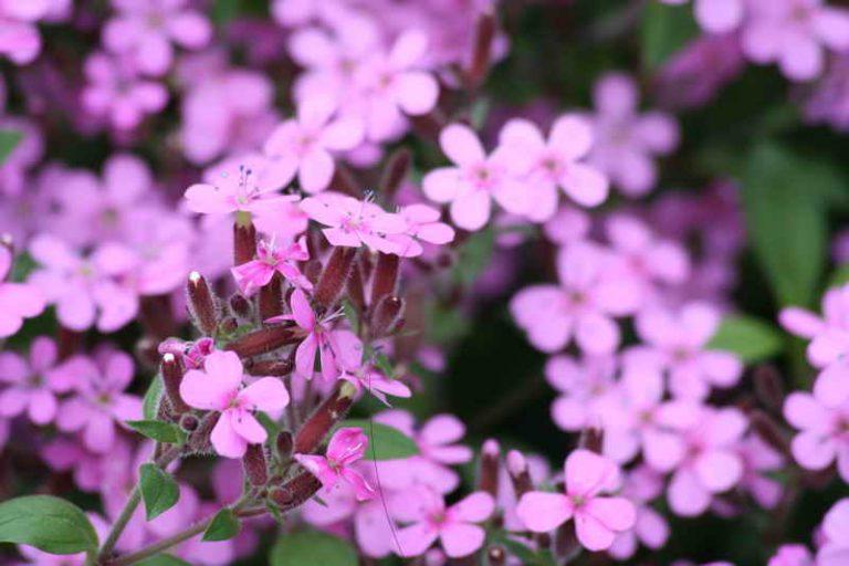 Неприхотливые растения для альпинария в вашем саду: советы садоводам