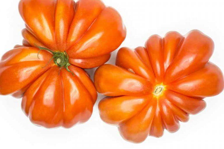 Как правильно выращивать томаты «бычье сердце»