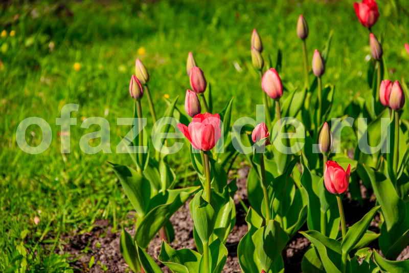 Газон в цветочном наряде своими руками - травянистые многолетники: советы садоводам