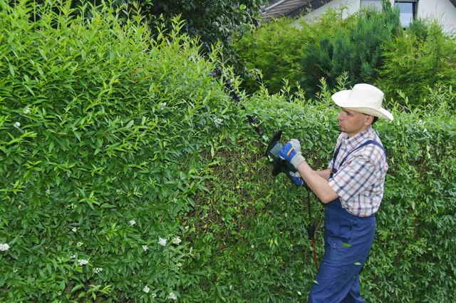Низкорослые кустарники в вашем саду: советы садоводам