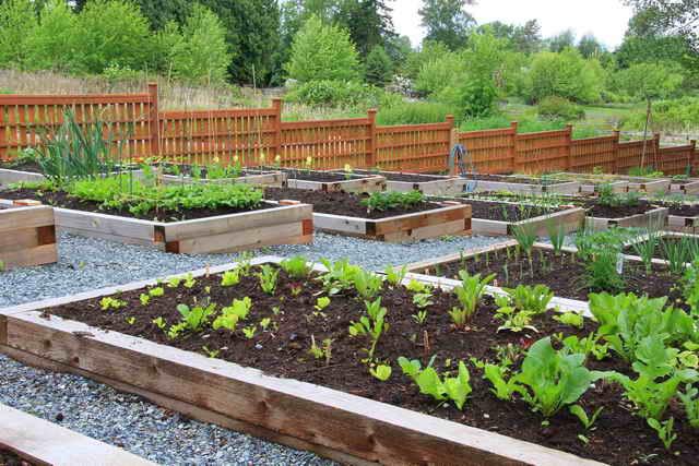 Планировка сада - советы садоводам